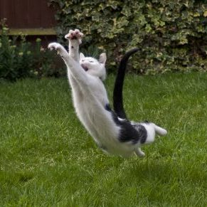 Cat in flight